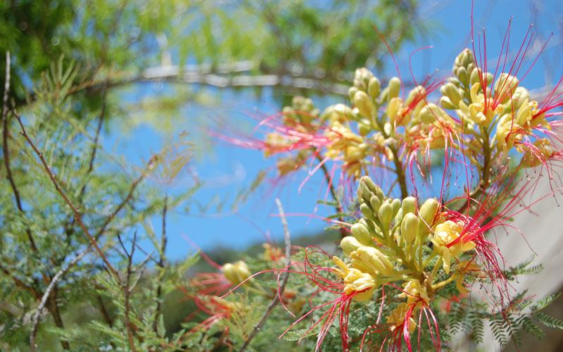 Vanjska flora